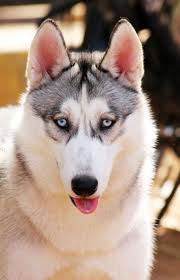 Alaskan husky goal setting coach new years resolutions