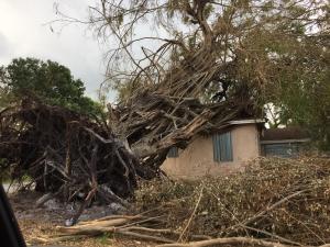 trauma hurricane irma broward fort lauderdale florida